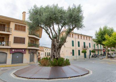 Santa Margalida - der Baum hat was künstlerisches Mallorca