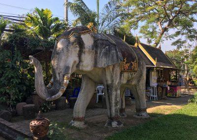 Chiang Mai - Wat Lok Molee - Elefant