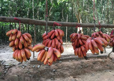 Siem Reap - Rote Bananen am Kulen Mountain