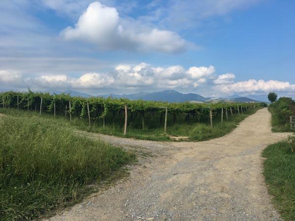 Camino del Norte - Von Zarautz nach Zumaia - Weinberge zwischen Getaria und Zumaia