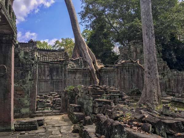 Siem Reap - Angkor - Preah Khan - Bäume wachsen durch die Tempelmauer