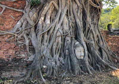 Ayutthaya Wat Mahathat - Kopf einer steinernen Buddha-Statue umschlungen von Wurzeln