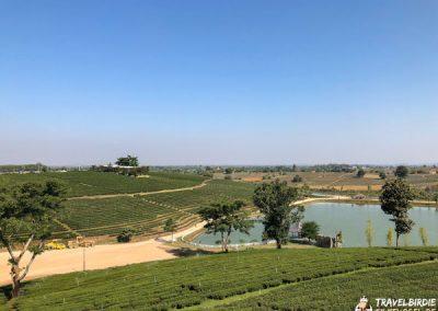 Choui Fong Teeplantage