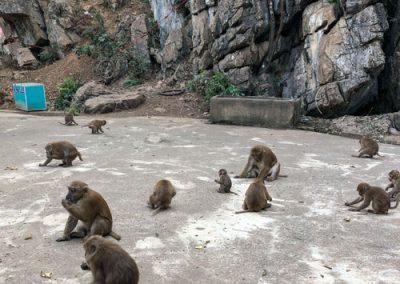 Tham Pla Cave - Affen