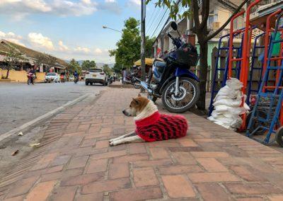 Hund mit modischer Kleidung